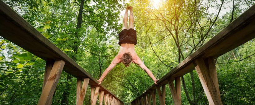 Der Wald als Therapeut – Gründung von FOREST-MEDICINE® mit Kursen, Trainings, Workshops und Mentoring unter einem Dach